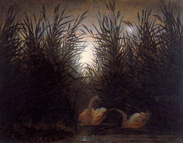 1820, Swans in the Rushes