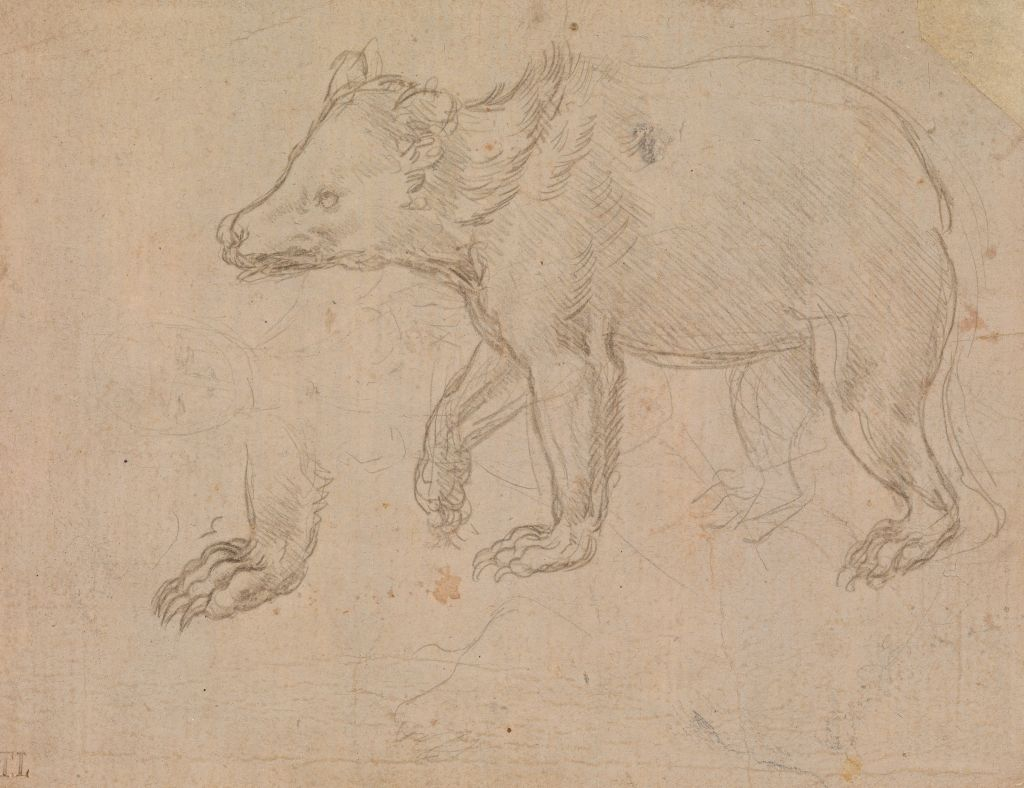 Leonardo da Vinci, A Bear Walking